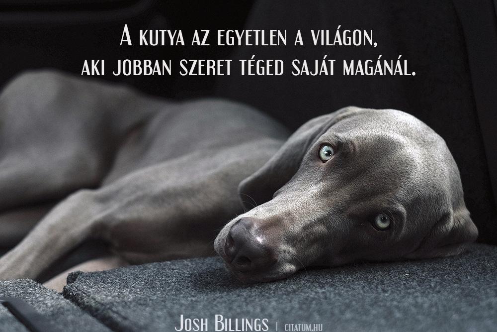 kutyáról idézetek A kutya az egyetlen a