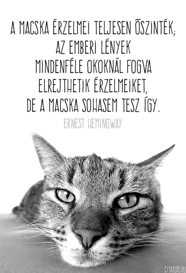 A macska érzelmei teljesen őszinték...