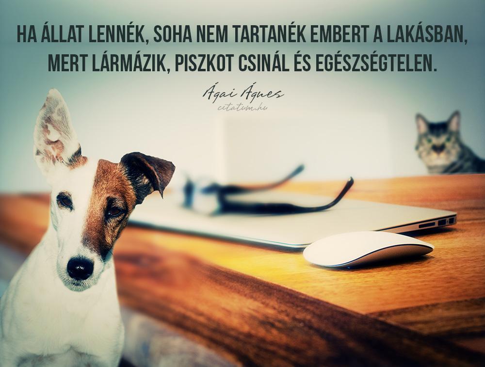 állatokkal kapcsolatos idézetek Állatokkal kapcsolatos idézetes képek