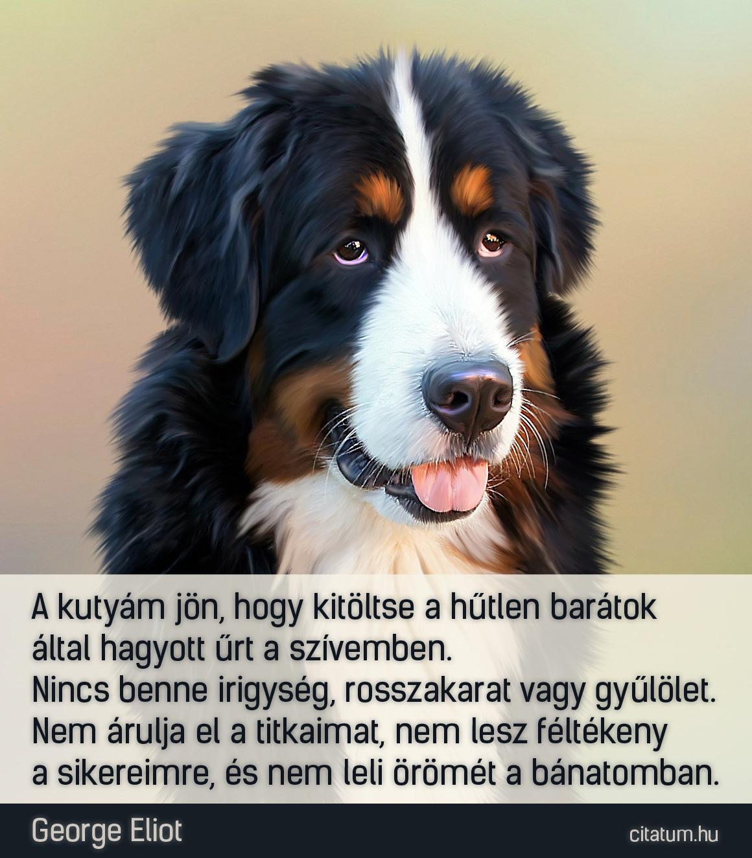 hűtlen barátok idézetek A kutyám jön, hogy kitöltse