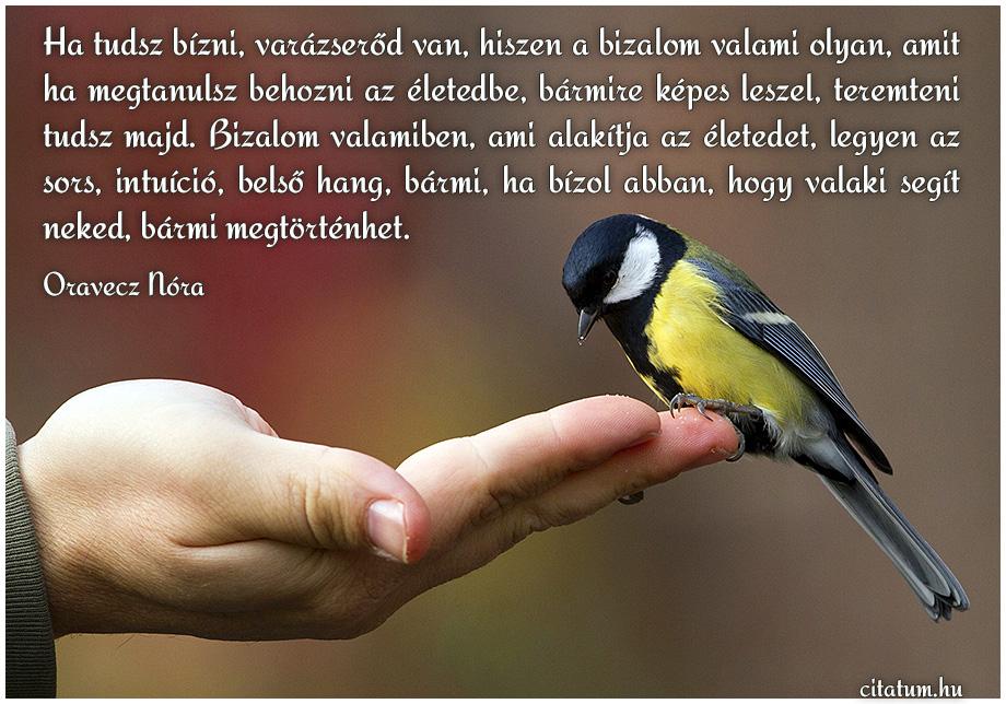 bizalom idézetek Bizalommal kapcsolatos idézetes képek bizalom idézetek
