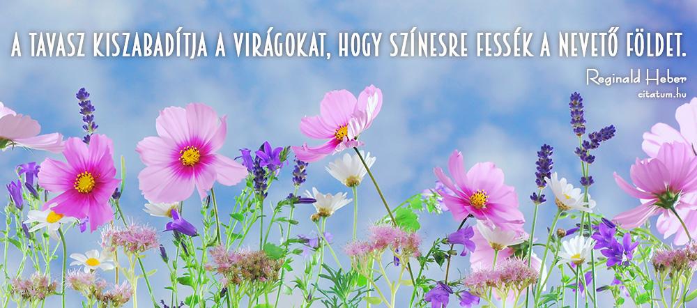 virágokról idézetek A tavasz kiszabadítja a virágokat